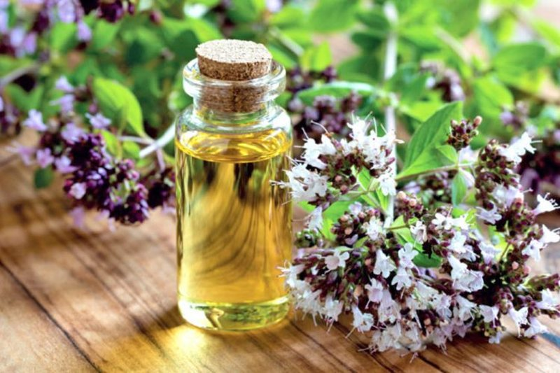 Cure for fast healing / Three drops of this oil that is easily prepared at home