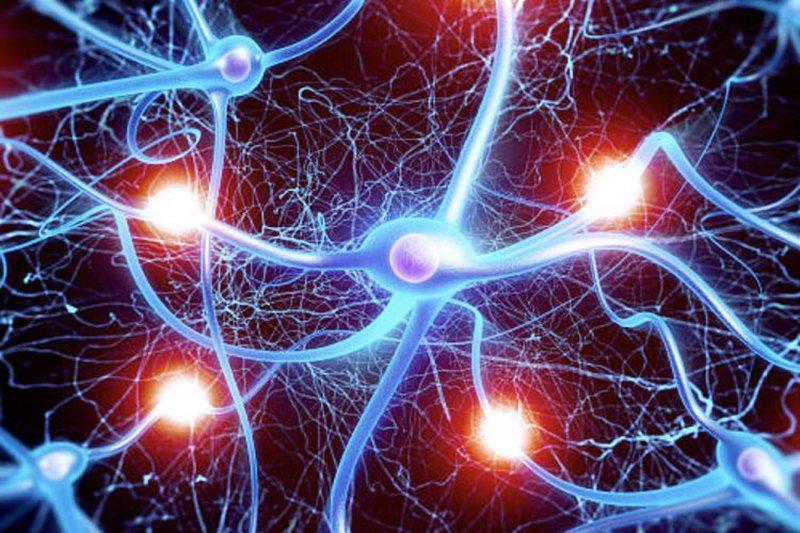 Si të shmangni plakjen e trurit? Mësoni mënyrat për të