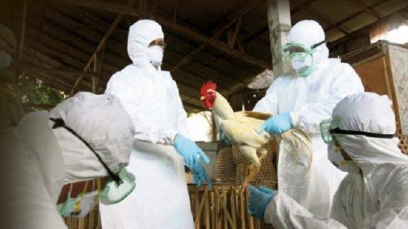 Grip i Shpendëve në Shqipëri, epidemiologu i njohur tregon cilat