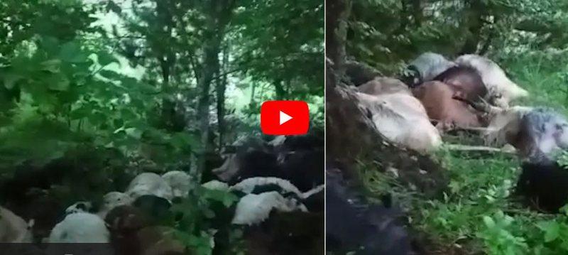 VIDEO/ E rëndë ajo çfarë ka ndodhur në Mirditë,