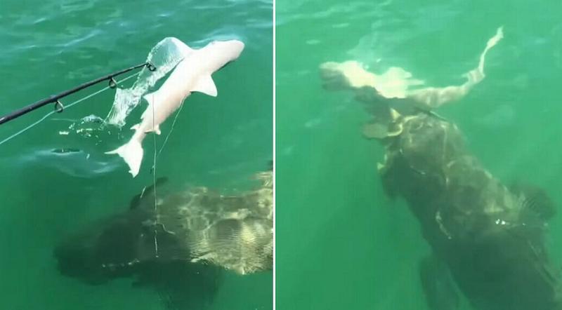 Shtangen peshkatarët, shohin me sy momentet kur peshkaqeni gëlltitet