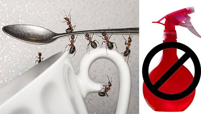 3 metoda natyrale si të eliminoni insektet nga kuzhina dhe ambientet e